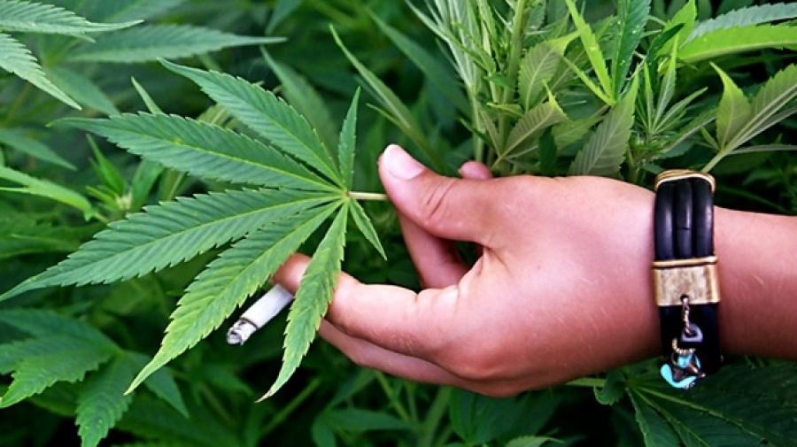 Канада стартира свободен пазар за медицинска марихуана за $1,3 милиарда