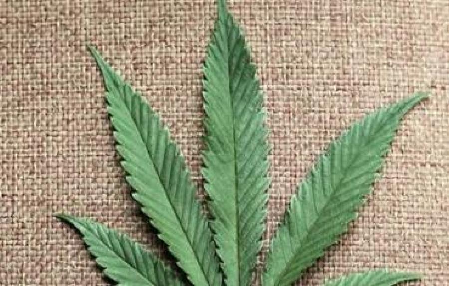 Доклад: Легализацията на марихуаната може да донесе на Израел 1.6 милиарда шекела под формата на данъци и бюджетни икономии
