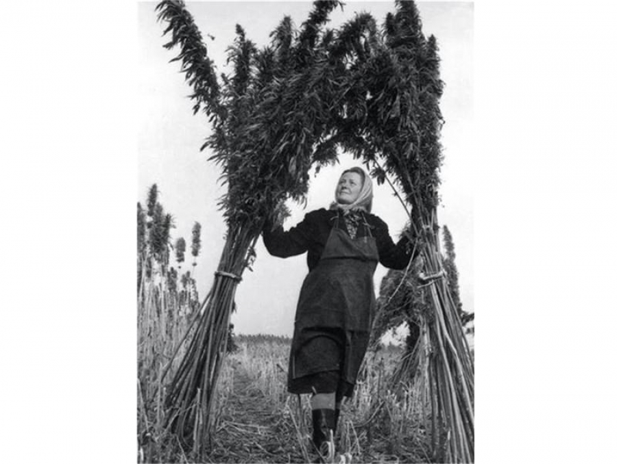 Българка, заснета в началото на 50-те години на нива с коноп
