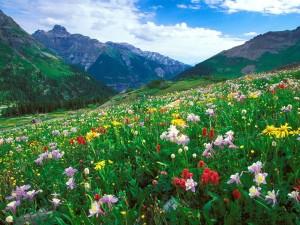 Колорадо ще амнистира затворените за марихуана