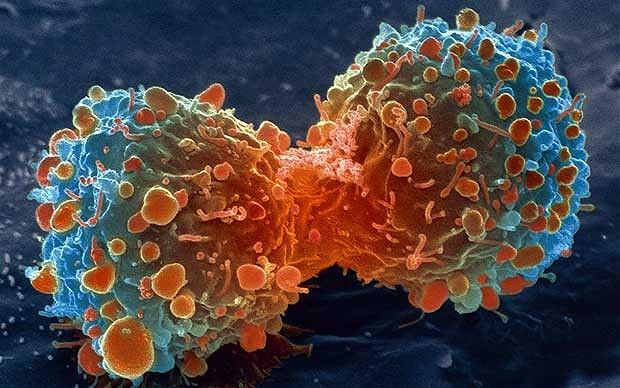 Ракови заболявания