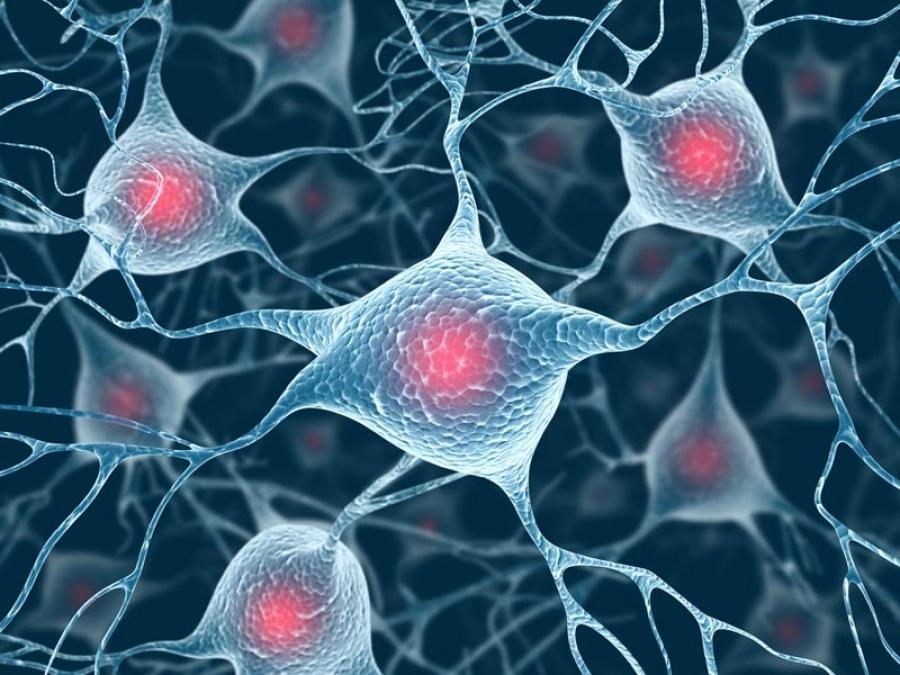 Канабисът помага за мозъка