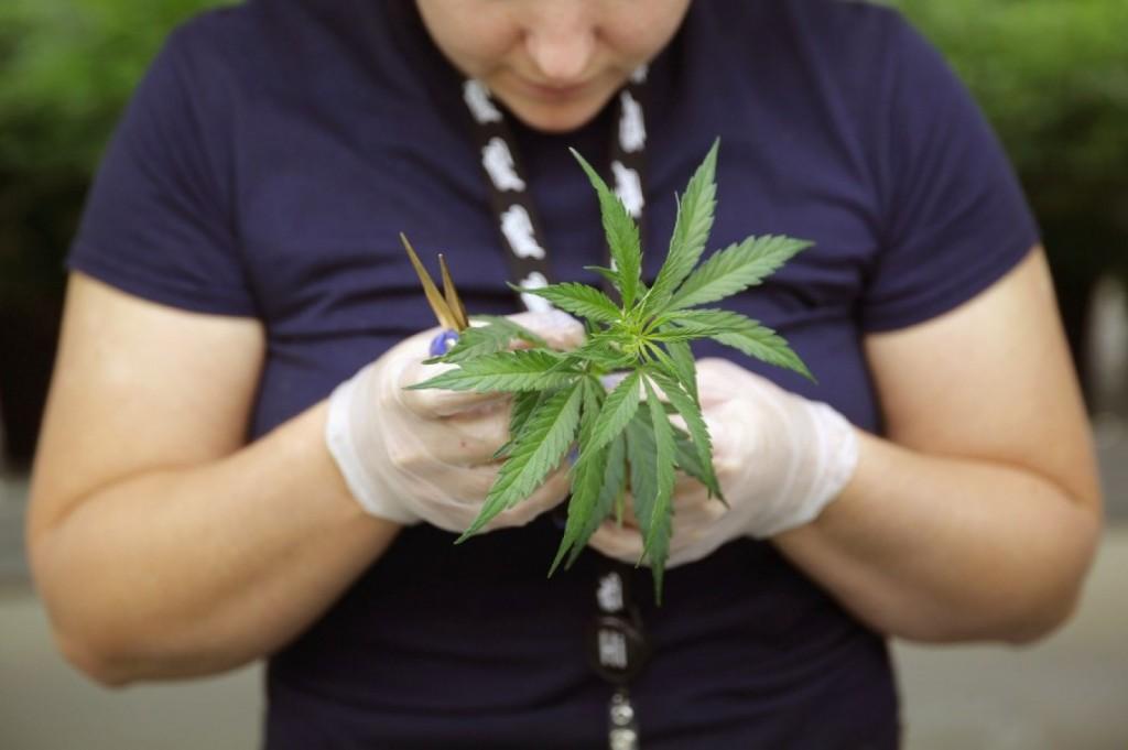 Какви са ползите от легализацията в Колорадо и Вашингтон за света