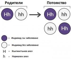 genes - bg