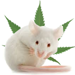 Mouse and Asthma
