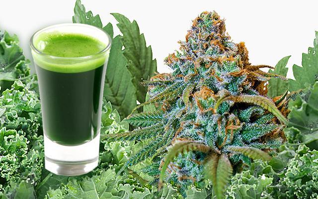 Зеленабис - новата хибридна суперхрана