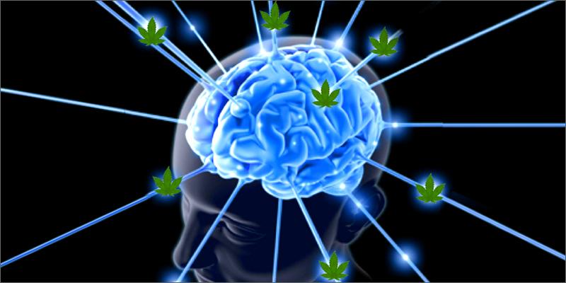 Най-новото изследване на връзката между канабиса и мозъка